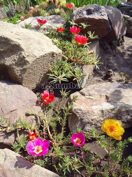 Фото альпийских горок