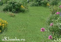 Виды газонов на приусадебных участках