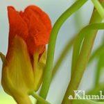 Однолетние цветы для дачи с фото и названиями