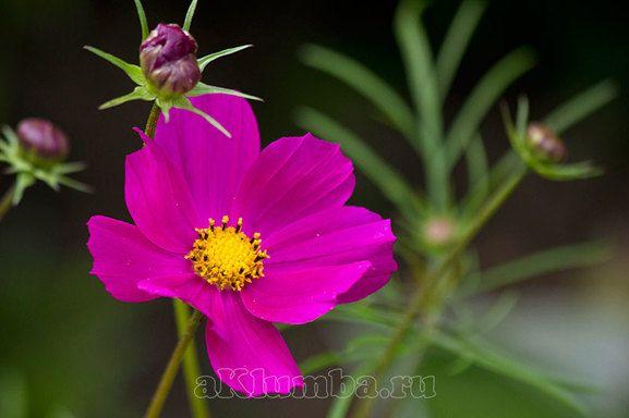 Ommerblumen Foto und Namensverzeichnis