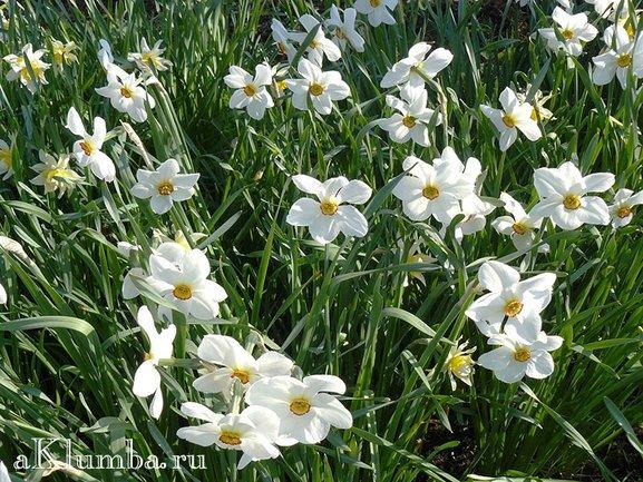 Полевые и садовые цветы Сибири. Часть 1 | 433x577