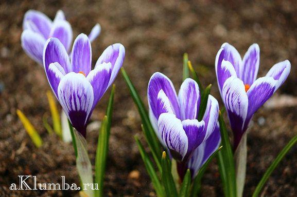 Растения на клумбе названия и фото