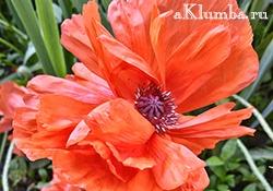 Цветы для клумбы — самые лучшие
