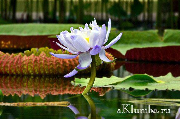Растения для плавающей клумбы
