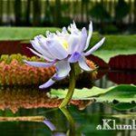 Плавающие клумбы — оригинальное украшение водоема