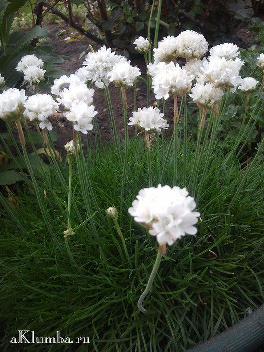 Весенние цветы фото и описание