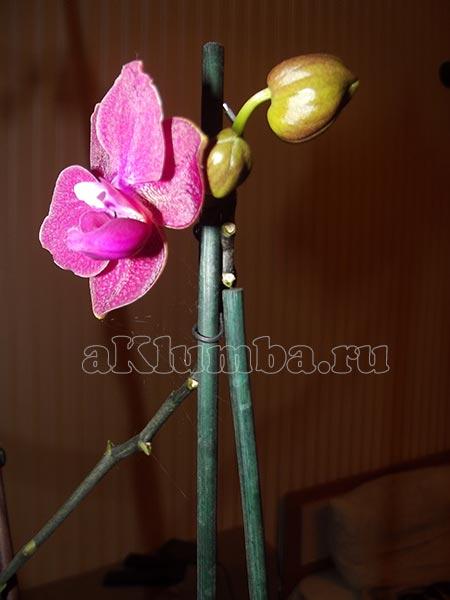 Паутинный клещ на орхидее как избавиться