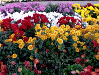 Осенняя клумба, фото, цветы для цветника осенью
